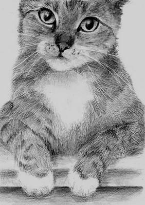 Кот нарисованный простым карандашом
