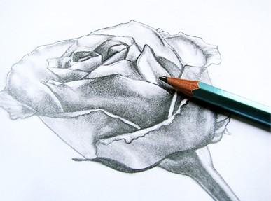 Как нарисовать розу что бы нарисовать