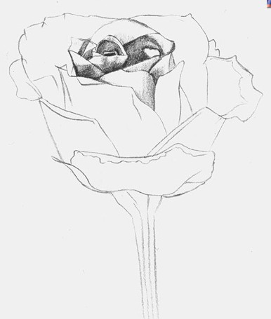 как нарисовать розу