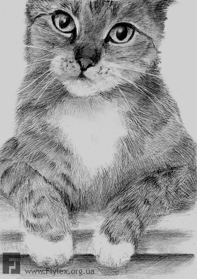 Картинки котята нарисованные